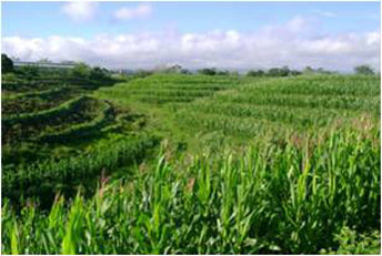 SALT (Slope Agriculture Land Technology) maximizes land use and conserves fertility.